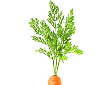 home-vege-carrot