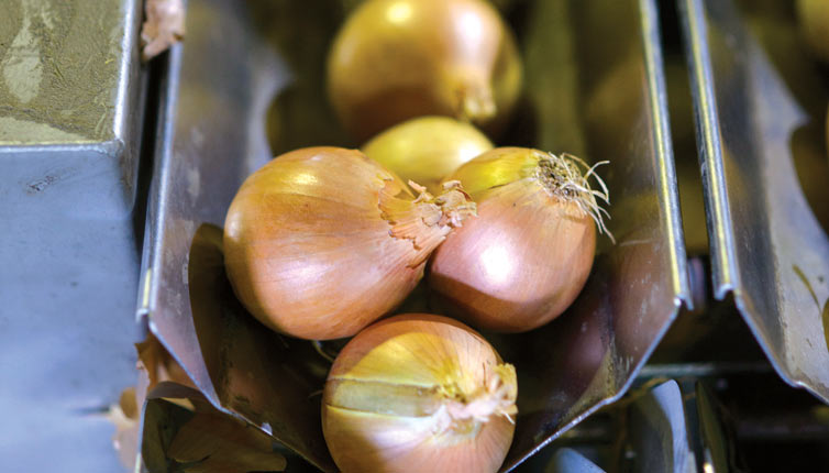 onions-washing-and-grading_2